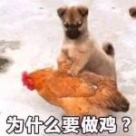 杨 yzw profile picture